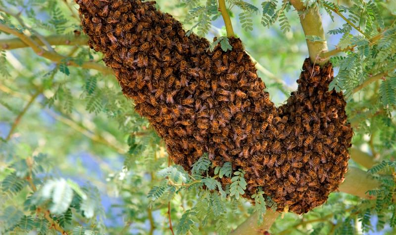 Топ-10 самых опасных насекомых в мире