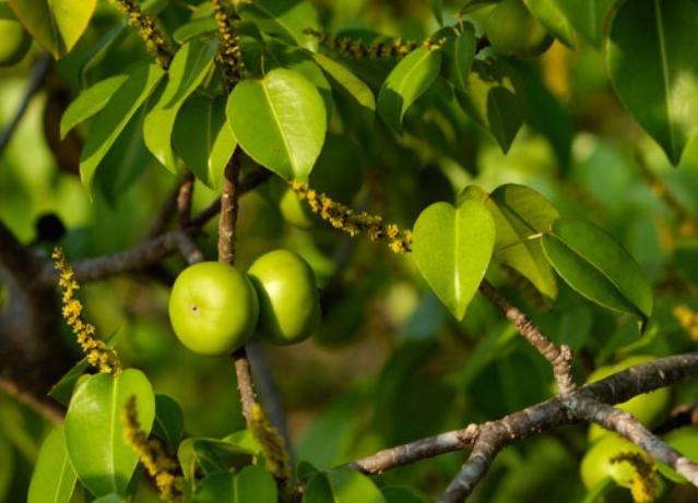 Топ-10 самых опасных растений в мире