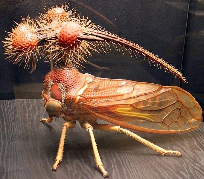 Топ-10 самых необычных насекомых в мире