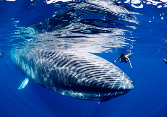 Топ-10 самых больших животных в мире