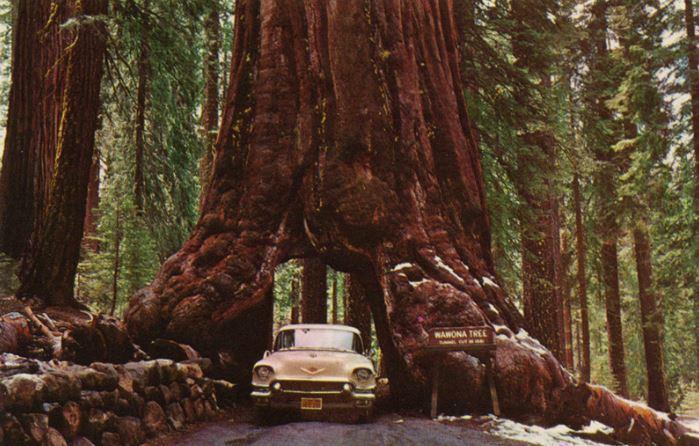 10 самых известных деревьев в мире